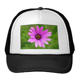 Casquillo púrpura de la margarita gorras