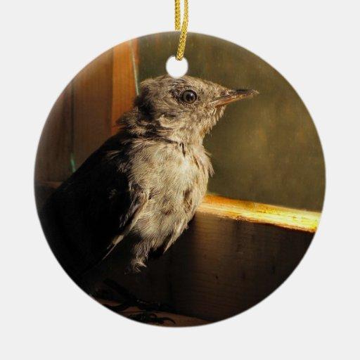 Catbird del bebé ornato