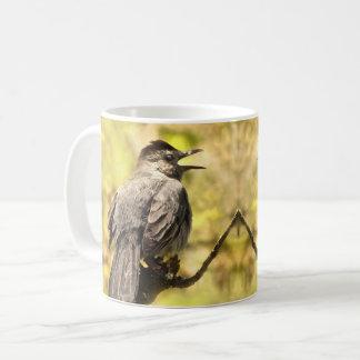 Catbirds grises del canto taza