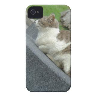 Cats Love iPhone 4 Case-Mate Cobertura