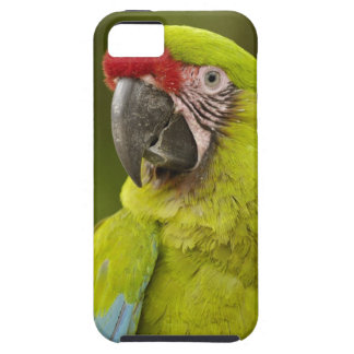 CAUTIVO militar del macaw (militaris del Ara). El Funda Para iPhone SE/5/5s