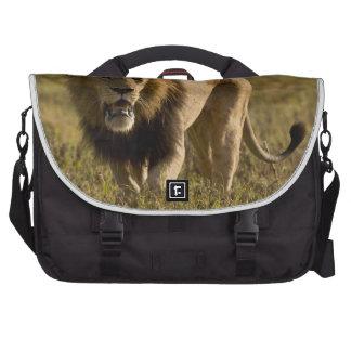 Caza masculina del león bolsas de portatil