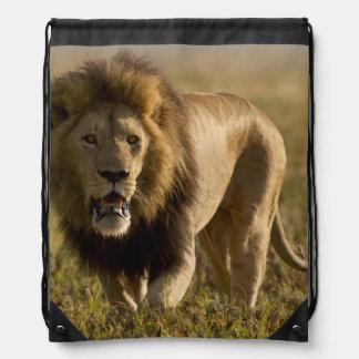 Caza masculina del león mochila
