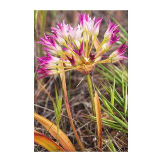 Cebolla de Tapertip que florece en las colinas Lienzo Envuelto Para Galerías