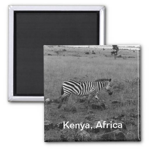 Cebra de África Kenia en el salvaje Imanes