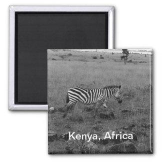Cebra de África Kenia en el salvaje Imán Cuadrado