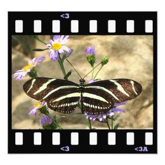 cebra de las mariposas longwing arte fotografico