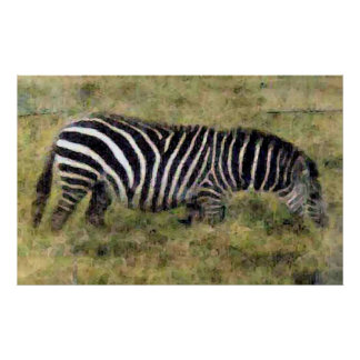 Cebra en la hierba poster