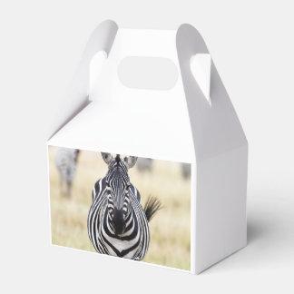 Cebra que le mira caja de regalos
