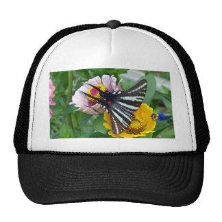 Cebra Swallowtail+Escarabajo japonés Gorro