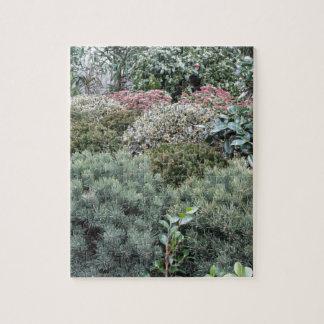 Centro de jardín con la selección de plantas de puzzle