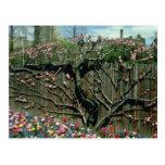 Cerca floreciente rosada, jardines botánicos f de  postal