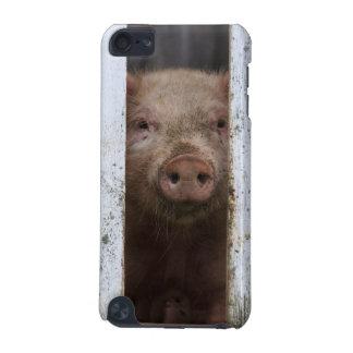 Cerdo de mirada lindo pero triste del bebé que funda para iPod touch 5G