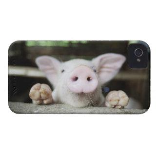 Cerdo del bebé en la pluma, cochinillo iPhone 4 Case-Mate carcasa