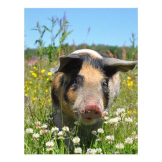 Cerdo en la naturaleza folleto 21,6 x 28 cm