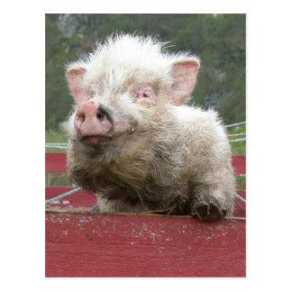 Cerdo miniatura 41a de Canadan Postal