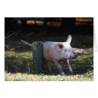 Cerdo que rasguña la tarjeta