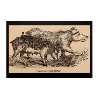 Cerdos del siglo XIX del estampado de animales de Impresión Acrílica