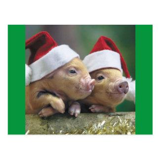 Cerdos en el gorra de Santa Postal