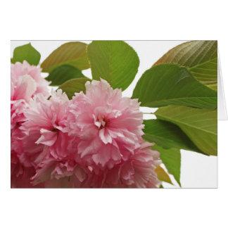 Cereza japonesa tarjetón