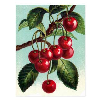 Cerezas del vintage en una postal de la rama
