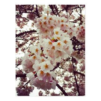 Cerezo en la floración postal