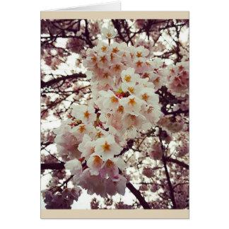 Cerezo en la floración tarjeta de felicitación