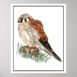 Cernícalo de la acuarela, halcón de gorrión, póster
