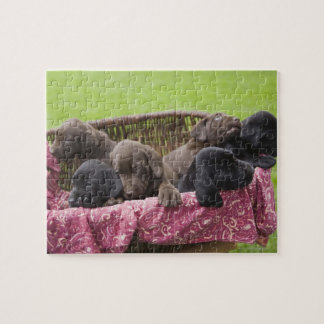 Cesta de perritos del labrador retriever puzzle