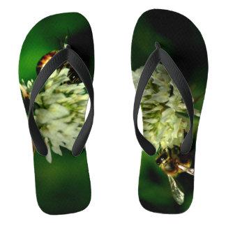 Chanclas Abeja en la fotografía de la flor en flips-flopes