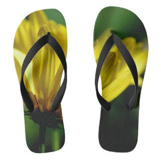 Chanclas Fotografía amarilla de la flor en flips-flopes