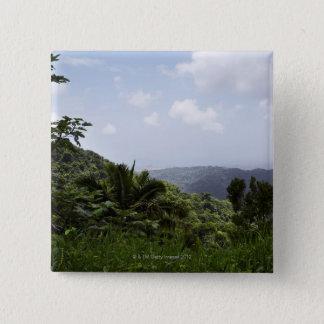 Chapa Cuadrada Árboles en una selva tropical, selva tropical del