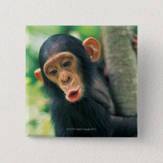 Chapa Cuadrada Chimpancé joven (trogloditas de la cacerola)