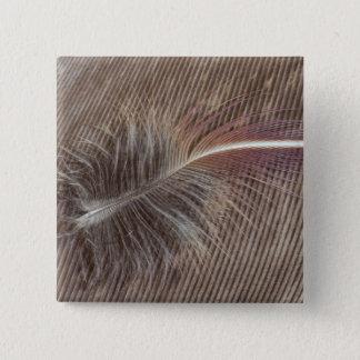 Chapa Cuadrada De Brown todavía de la pluma vida pálida