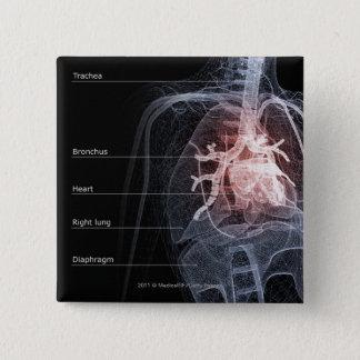 Chapa Cuadrada Diagrama del sistema respiratorio y del corazón
