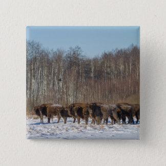 Chapa Cuadrada Manada del bisonte