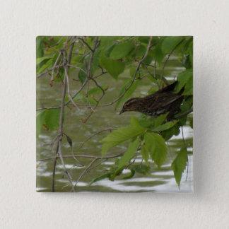 Chapa Cuadrada pesca negra de alas rojas del pájaro de una rama