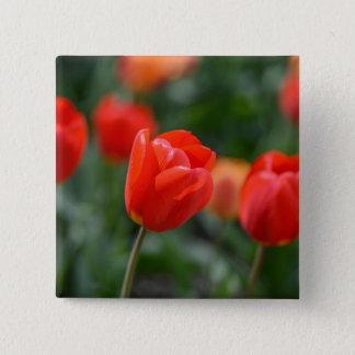 Chapa Cuadrada Tulipanes rojos en el jardín