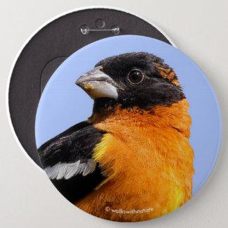 Chapa Redonda De 15 Cm Pájaro de cabeza negra hermoso en un árbol