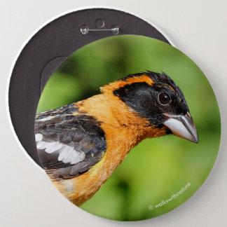 Chapa Redonda De 15 Cm Primer de un pájaro de cabeza negra hermoso