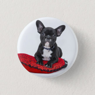 Chapa Redonda De 2,5 Cm Dogo blanco y negro Terrier en la almohada roja
