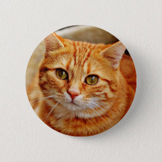 Chapa Redonda De 5 Cm Cute Orange Cat