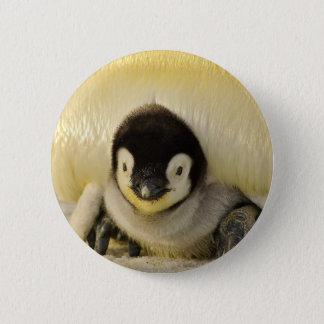 Chapa Redonda De 5 Cm Emperador animal de la vida antártica del bebé del