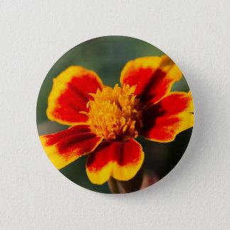 Chapa Redonda De 5 Cm flor en el jardín