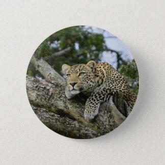 Chapa Redonda De 5 Cm Gato salvaje animal del safari de África del árbol