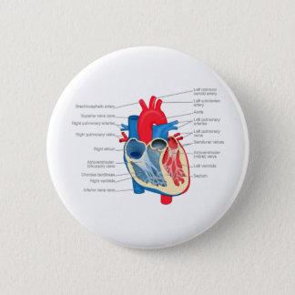 Chapa Redonda De 5 Cm Heart_Anatomy