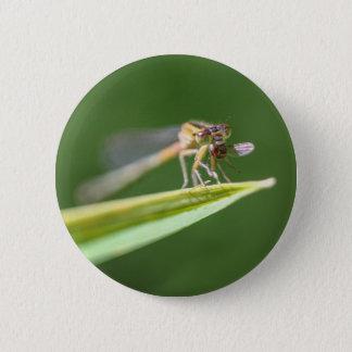 Chapa Redonda De 5 Cm Libélula que come el mosquito