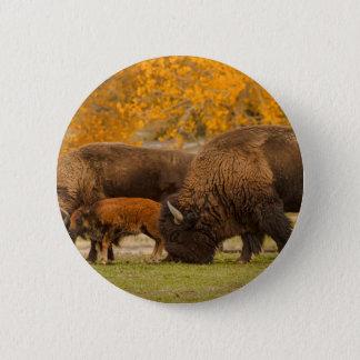 Chapa Redonda De 5 Cm Nación de la familia del bisonte
