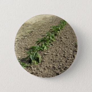 Chapa Redonda De 5 Cm Plantas frescas de la albahaca que crecen en el