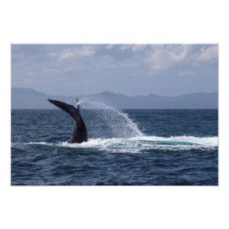 Chapoteo de la cola de la ballena jorobada fotos